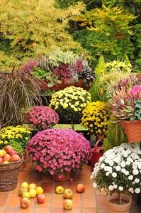 We wrześniowym ogrodzie – kwiaty, krzewy i drzewa między latem a jesienią