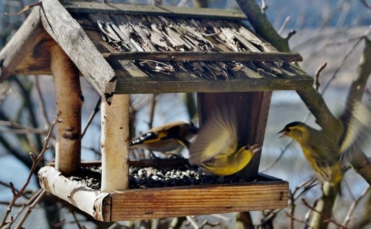 Karma dla ptaków – czym karmić ptaki zimujące