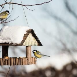 Karmnik dla ptaków – jaki wybrać?