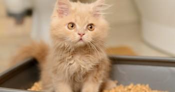 Jaką kuwetę dla kota kupić?