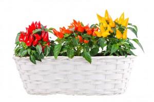 Skrzynki, donice, kosze – w czym trzymać rośliny wiosną