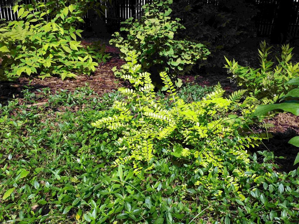 Maj-w-dwuletnim-ogrodzie-okrywowe