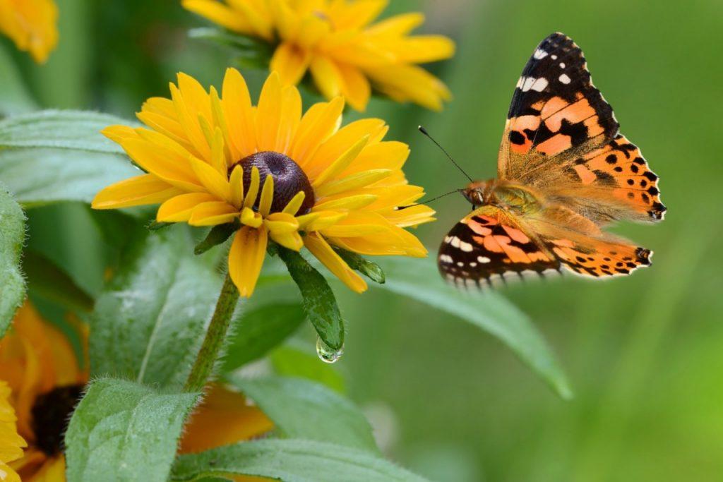 Motyle w moim ogrodzie
