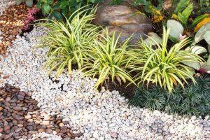 Ściółkowanie roślin – ważne, szczególnie w letnie upały