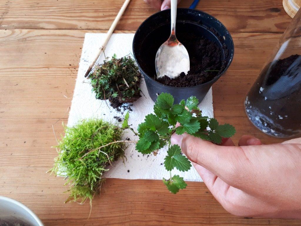 Jak samodzielnie zrobić las w słoju?